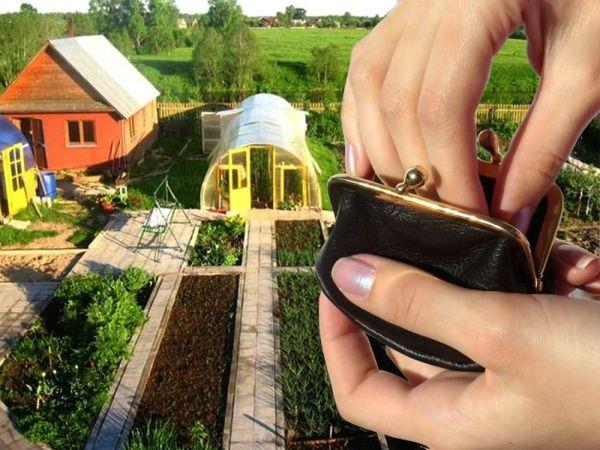УФНС России по Нижегородской области предоставили информацию о налогообложении теплиц на садовых и огородных земельных участках